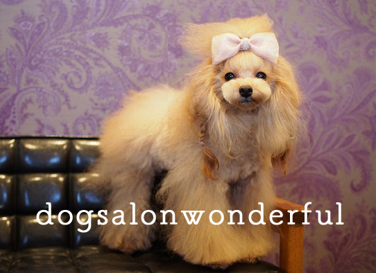 Dog salon Wonderful