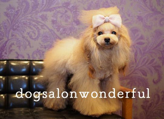 Dog salon Wonderful
